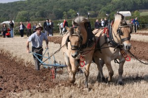 Horse ploughing 2011